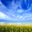 Beautiful field — Stock Photo #15601577