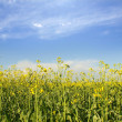 Stock Photo: Beautiful field