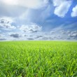 Beautiful field — Stock Photo