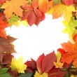 Colorful autumn frame - Stockfoto