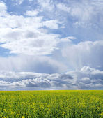Beautiful Green Field and a blue sky with sun and clouds — Stock Photo