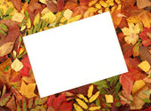 Colorful autumn frame — Stock Photo