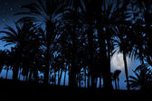 Palm ağaçlar tropikal ay ışığı altında — Stok fotoğraf