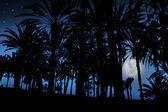 Palmbomen onder het maanlicht in de tropen — Stockfoto