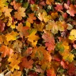 Autumn background — Stock Photo #16020213