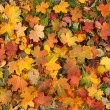autumn background — Stock Photo #16021263
