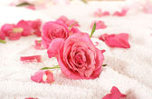 Roses over towel — Stock Photo