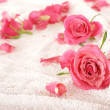 Roses over towel - Stock Photo