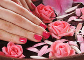 Beautiful female hands with flowers and petals in spa style — Stock Photo