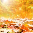 Autumn background — Stock fotografie #29549081