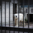Sad and lonely polar bear in the cage — Photo