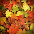 colorful autumn background — Stock Photo