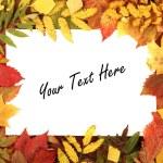 Colorful autumn frame — Stock Photo #29549267