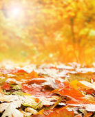 Autumn background — Stock Photo