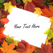 Colorful autumn frame — Foto Stock