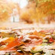 Autumn — Stockfoto #32184253