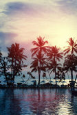 Sunset at a coastline with palm trees — Stock Photo