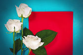 Three white roses with red card — Stock Photo