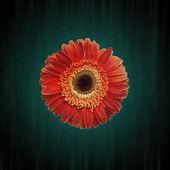 Abstracte grunge bloem achtergrond — Stockfoto