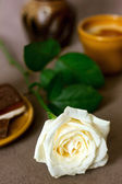 Romantic breakfast with white rose — Stock Photo