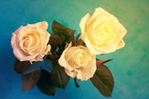 Three white roses — Stock Photo