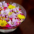 Stock Photo: Bowl with chrysanthemum flowers