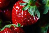 Ripe strawberry close up — Stock Photo