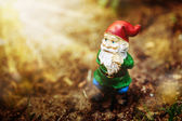 Dreamy garden dwarf — Stock Photo