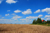 Farmland — Zdjęcie stockowe
