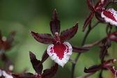 Beautiful orchids — Stock Photo