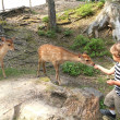 Deer and boy at a wood — Foto de Stock