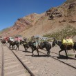 Stock Photo: Horses at Puente del Inca