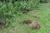 Wild animals in nature — Stock Photo