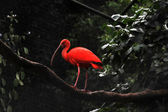 Flamingo at Parque das Aves — Stock Photo