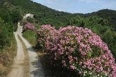Rural road near Portoferraio on Elba island — Stock Photo