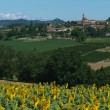 Farmland at Monterrato on Italy - Stock Photo