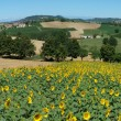 Farmland of Monterrato at Piemonte - Stock Photo