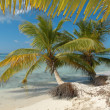 Palm trees on Saona island - Stock Photo