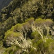 Trees and Twists on Reunion island - Stock Photo