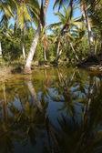Teakové Playa bonita poblíž las galeras — Stock fotografie