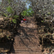 Trees of the Khmer archaeological site of Wat Phu Champasak, Laos — Stock Photo #18137327