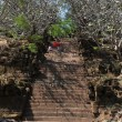 Trees of the Khmer archaeological site of Wat Phu Champasak, Laos — Stock Photo