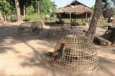 Gård på ön av don det, laos — Stockfoto
