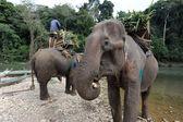 Elephants at river Xiagnabouli near Luang Prabang on Laoselephants at river Xiagnabouli near Luang Prabang on Laos — Stock Photo
