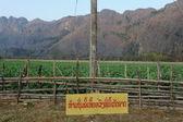 烟草领域在村庄的禁止香港罗湖在老挝 — 图库照片