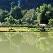 Rural landscape near Vang Vieng on Laos — Stock Photo #18515783