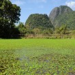 Rural landscape near Vang Vieng on Laos — Stock Photo #18515985