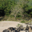 Bank of river Mekong on Laos - Photo