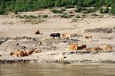 Mekong River in Laos — Stock Photo