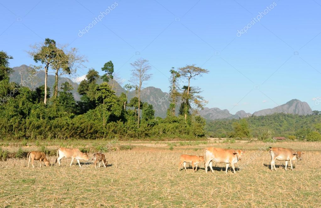 Rural landscape near Vang Vieng on Laos — Stock Photo #18514777